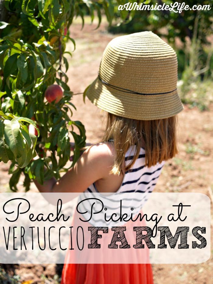 Peach-picking-vertuccio-farms