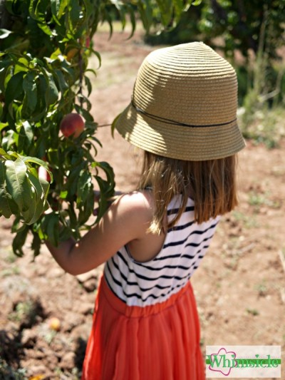 girl-picking-peaches