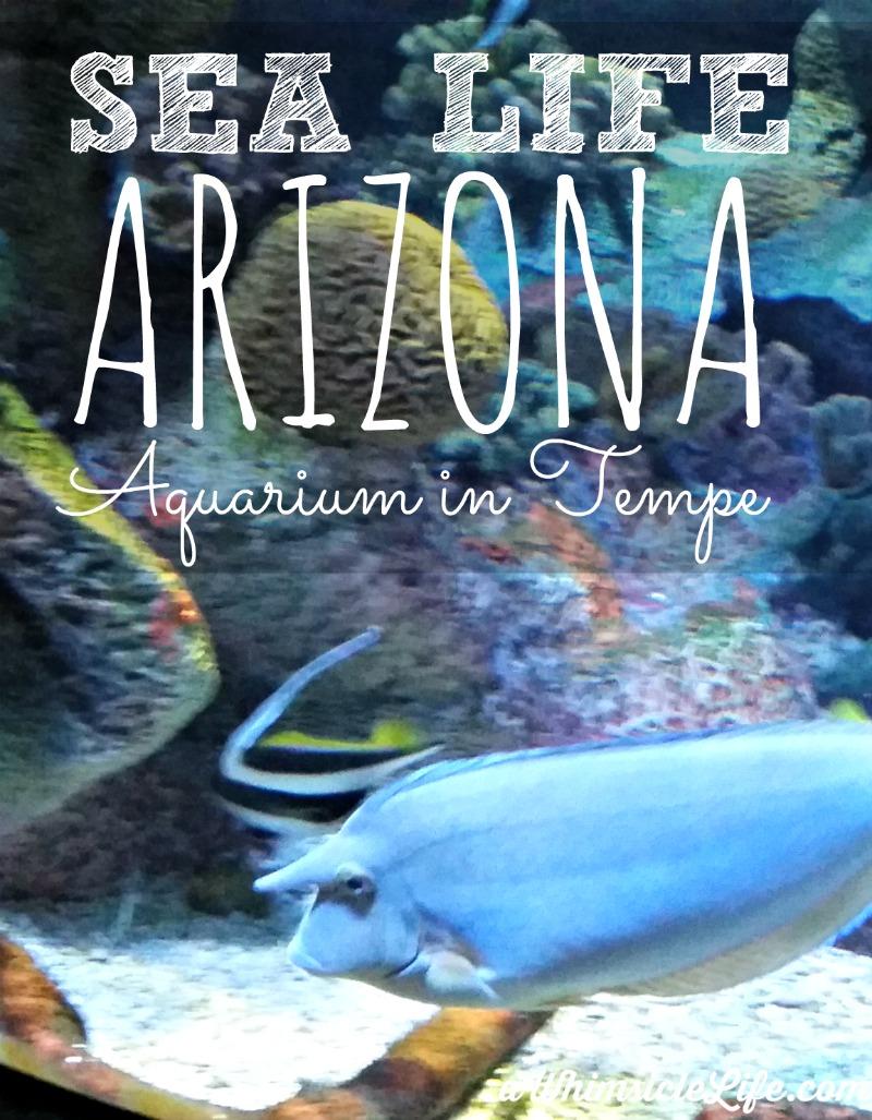 Sea Life Arizona Aquarium In Phoenix