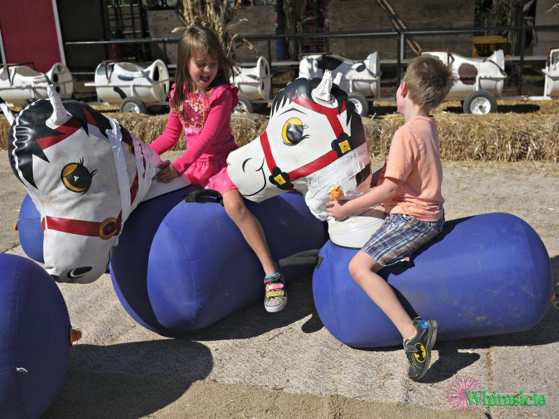 bouncing-cows