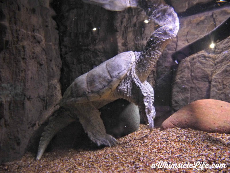Turtle-tank-wildlife-world-zoo