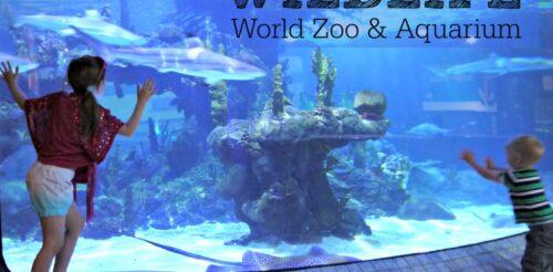 Wildlife-world-zoo
