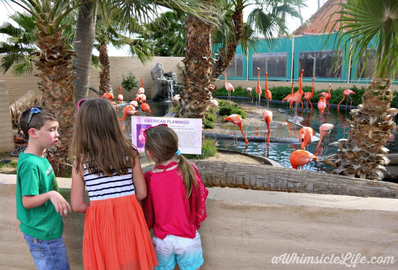 kids-flamingos-wildlife-world-zoo
