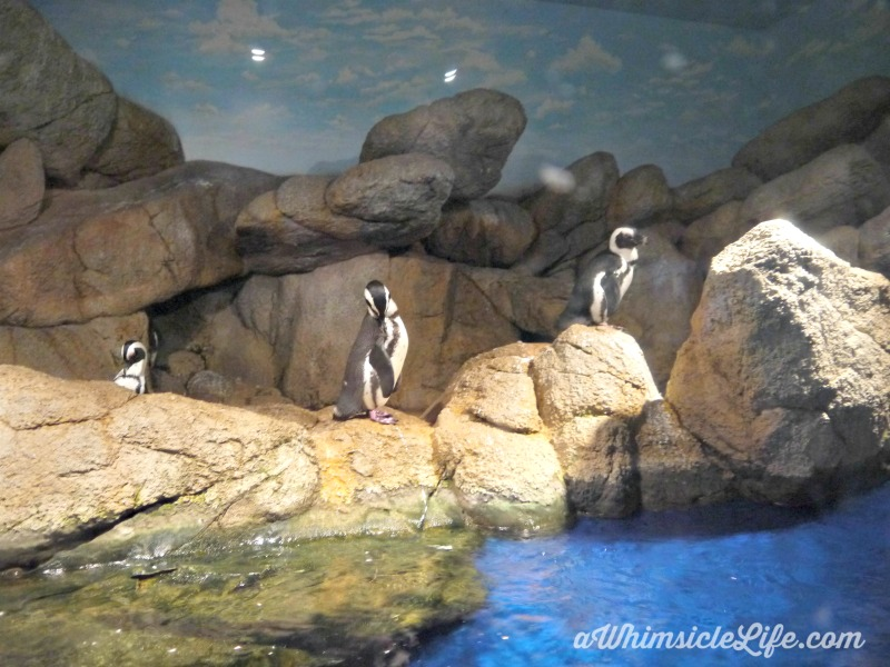 penguins-Wildlife-world-zoo