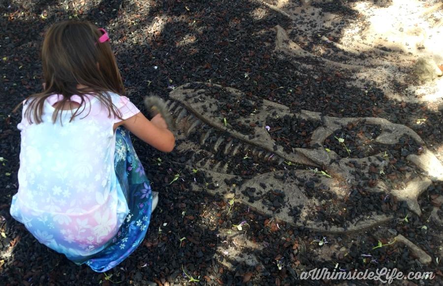 Arizona Museum of Natural History dinosaur fossils