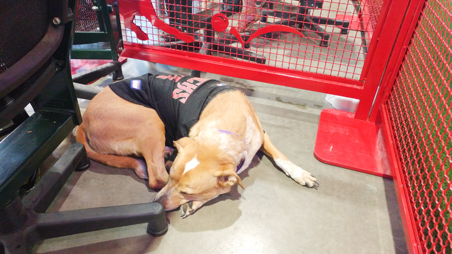 Want to take your dog to a baseball game? You can during the Dog Days of Summer at Chase Field. Click to see exactly what the experience is like and what's included. [ad]