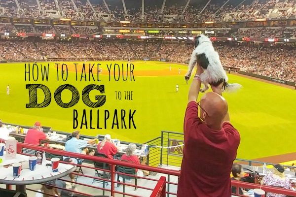 How to Take Your Dog to the Ballpark
