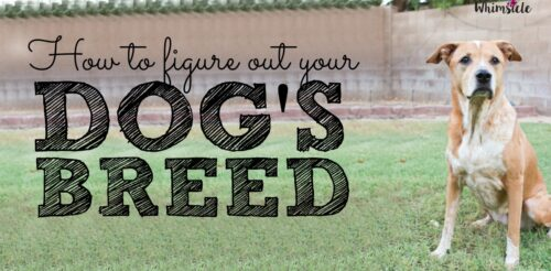 Wonder about your rescue dog's exact breed no longer! This easy test will tell you your pup's family tree!